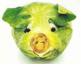 Dog of Cabbage